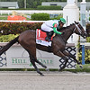 Octane wins the 2021 FTBOA Florida Sire Affirmed Stakes at Gulfstream Park<br /> Coglianese Photos/Lauren King