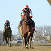 Search Results wins the 2021 Gazelle Stakes at Aqueduct<br /> Coglianese Photos