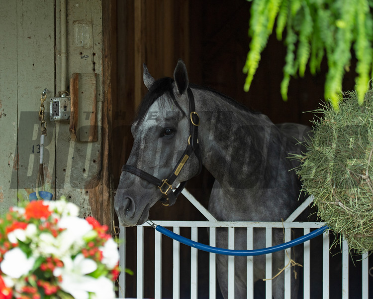 Essential Quality and Brad Cox the morning after his Travers (G1) win.<br /> Scenes from New York Thoroughbred Breeders day during Travers week in Saratoga on Aug. 27, 2021.