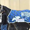 Bourbonic wins the 2021 Wood Memorial at Aqueduct<br /> Coglianese Photos/Joe Labozzetta