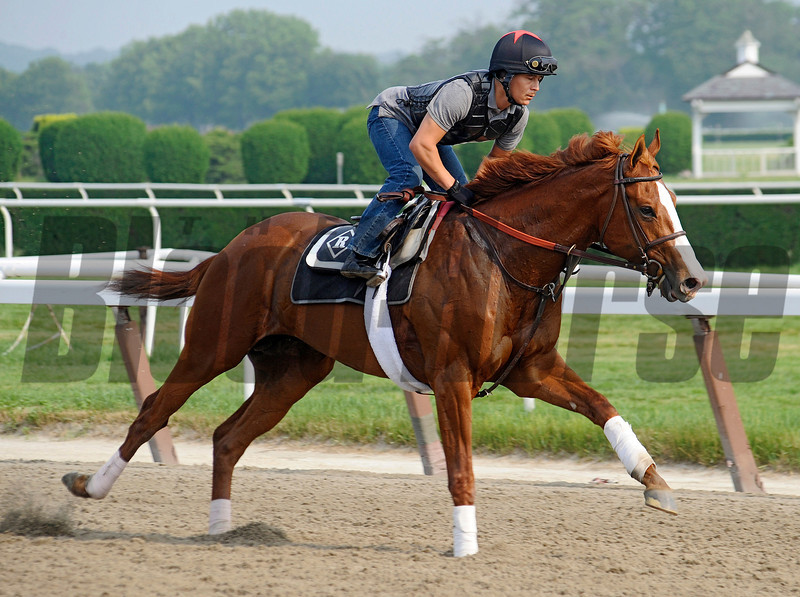(June 1, 2011) Preakness stakes winner Shackleford, and exercise rider Fastino Aguilar...<br /> Photo by Rick Samuels