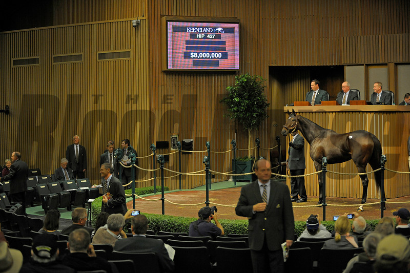 Caption: Hip 427 Royal Delta brings $8.5 million<br /> Keeneland Sales, Keeneland, November 8, 2011, in Lexington, Ky.<br /> RoyalDeltaHip427 image930<br /> Photo by Anne M. Eberhardt