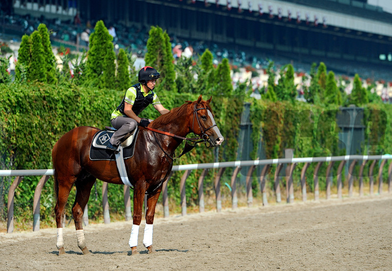 (June 9, 2011) Shackleford, When Shack does work, he works hard.<br /> Photo by Rick Samuels