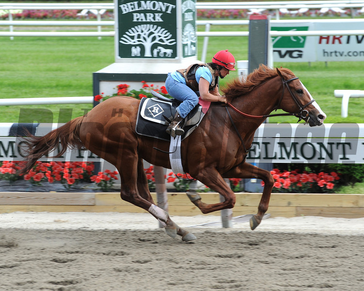Shackleford works at Belmont Park 6/4/2011.<br /> Photo by Coglianese Photos/NYRA