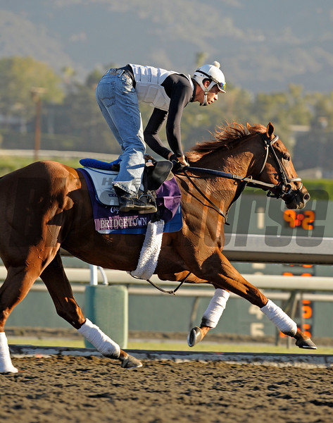 Caption: Bridgetown<br /> Breeders' Cup morning works at Oak Tree/Santa Anita on Nov. 4, 2009, in Pasadena, California.<br /> Works1Nov4  image380<br /> PHoto by Anne M. Eberhardt