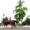 (June 4, 2011) Shackleford on his way back to the barn, after his  <br /> 5 furlong work, Saturday morning....<br /> Photo by Rick Samuels