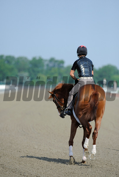 Shackleford on the track this morning at Belmont Park in Elmont, N.Y. June 10, 2011.  Photo by Skip Dickstein