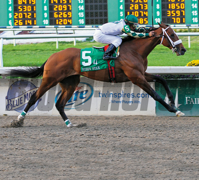 2-19-2011 Mucho Macho Man with Rajiv Maragh aboard easily wins the Grade II Risen Star Stakes at Fair Grounds in New Orleans, LA.<br /> Photo by Lou Hodges, Jr.