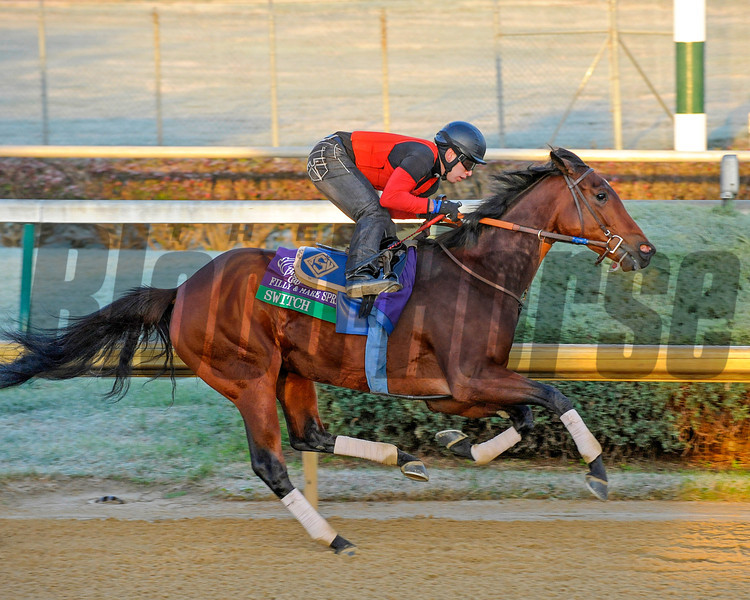 Switch<br /> Works and schooling with Breeders' Cup horses at Churchill Downs in Louisville, Ky. on Oct. 30, 2011<br /> Photo by Anne M. Eberhardt