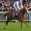 Dawn Approach Royal Ascot<br /> Photo by Trevor Jones