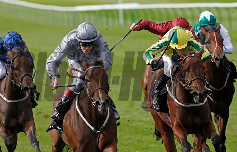 Racing from Newmarket 29/9/12, Cheveley Park Stakes.<br /> Rosdhu Queen (grey colours) wins from  Baileys Jubilee (yellow/green)<br /> ).<br /> Photo by Trevor Jones