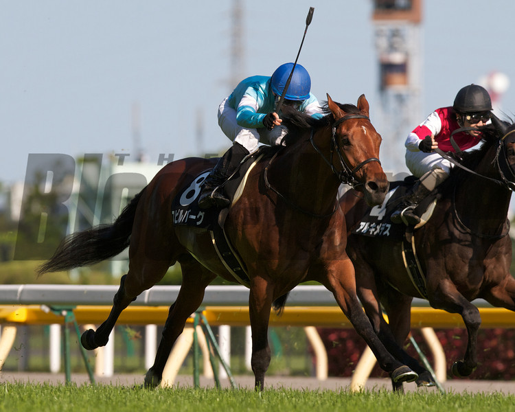 Flower Alley's half brother, Spielberg (Deep Impact), with Hiroyuki Uchida in the irons, wins the Principal Stakes and a spot in the 2012 Japanese Derby.<br /> Trainer: Kazuo Fujisawa<br /> Owner: Hidetoshi Yamamoto<br /> Breeder: Shadai Farm  <br /> Photo by Kate Hunter