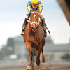 Algorithms winning the Holy Bull Stakes 2012.<br /> Coglianese Photos