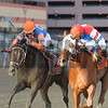 Stay Thirsty (left) wins the 2012 Cigar Mile over Groupie Doll<br /> Coglianese Photos