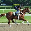 Kentucky Derby and Preakness winner I'll Have Another, and exercise rider Jonny Garcia, Friday morning, June 1st at Belmont<br /> © 2012 Rick Samuels/The Blood-Horse