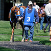 Larry Zip It, by Run Away and HIde<br /> Keeneland racing scenes on opening day, Friday, April 6, 2012, in Lexington, Ky.<br /> Photo by Anne M. Eberhardt