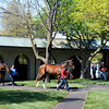 Caption: <br /> Keeneland racing scenes on opening day, Friday, April 6, 2012, in Lexington, Ky.<br /> KEESpring2012/FipkeFeature506<br /> Photo by Anne M. Eberhardt
