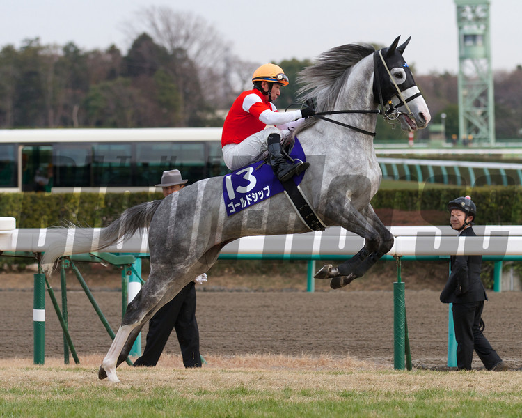 Gold Ship (Stay Gold x Point Flag, Mejiro McQueen), with Hiroyuki Uchida in the irons, wins the Arima Kinen on December 23rd, 2012. Photo by Kate Hunter