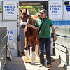 Kentucky Derby and Preakness winner I'll Have Another, and his groom Benjamin Perez, arrive at Belmont Park Sunday afternoon, after a van ride from Baltimore<br /> Photo by Rick Samuels
