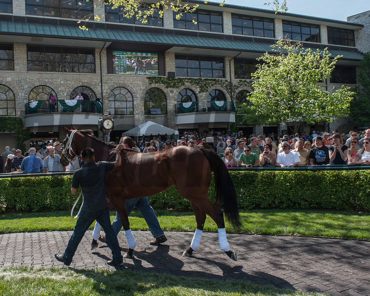 Horse of the year Havre de Grace is paraded for the fans at Keeneland.<br /> Photo by Mallory Haigh