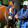 Larry Zip It by Run Away and Hide<br /> Keeneland racing scenes on opening day, Friday, April 6, 2012, in Lexington, Ky.<br /> Photo by Anne M. Eberhardt