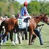 Keeneland Race Course; Lexington; KY 4/12/12; Groupie Doll; Rajiv Maragh up; wins the Vinery Madision Stakes<br /> photo by Mathea Kelley