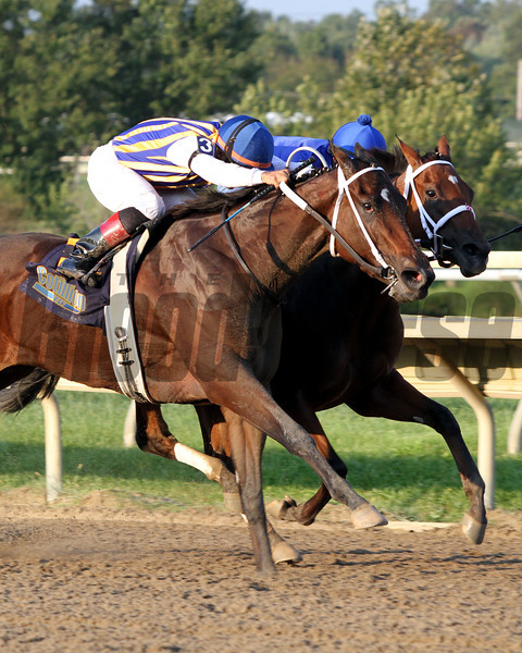 My Miss Aurelia w/Corey Nakatani up beats Questing w/Irad Ortiz Jr. up to win the 43rd Running of the Cotillion Stakes (GI) at Parx on September 22, 2012.<br /> Photo by Chad B. Harmon