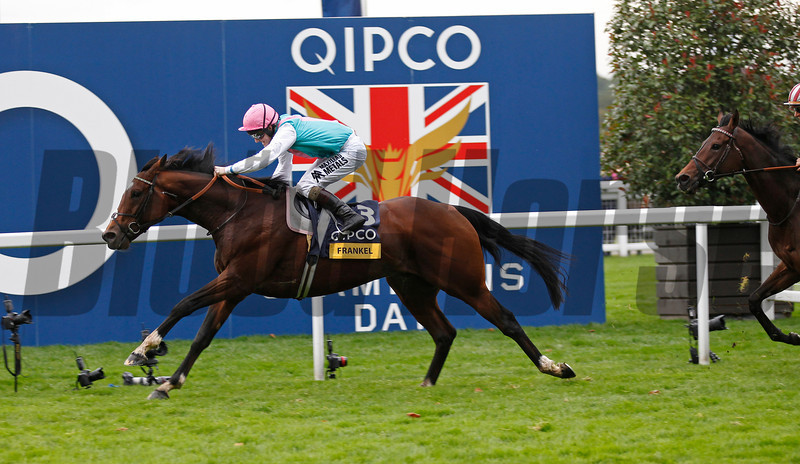 Racing from Ascot 20/10/12 Champion Stakes.<br /> Frankel (left) wins from Cirrus Des Aigles (right).<br /> Trevor Jones Photo