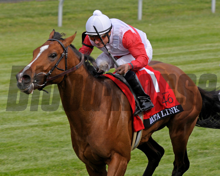 Caption:  <br /> Data Link with Alex  Solis up wins the Maker's 46 Mile (gr. IT) at Keeneland on April 13, 2012, in Lexington, Ky.<br /> Makers46Mile Origs1 image9005<br /> PHoto by Anne M. Eberhardt
