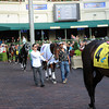 Little Mike paraded at Gulfstream Park on December 1, 2012.<br /> Coglianese Photos