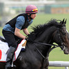 "Dubai 2012<br /> So You Think, DWC<br /> Meydan Race Track""<br /> Photo by Mathea Kelley"
