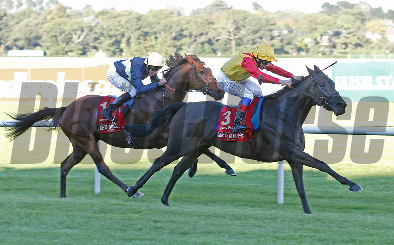Racing from Leopardstown, 8/9/12 The Red Mills Irish Champion Stakes.<br /> Snow Fairy wins from Nathaniel (left)<br /> Photo by Trevor Jones