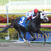 Bahamian Squall wins the Sunshine State Stakes<br /> Jockey: Luis Saez<br /> GULFSTREAM PARK, Hallandale, FL<br /> Purse: $100,000<br /> Date: December 2, 2012<br /> Class:<br /> TV:<br /> Age: 3 yo's & up<br /> Race: 8<br /> Distance: Seven Furlongs<br /> Post Time: 4:05 PM<br /> Coglianese Photos/Courtney Heeney