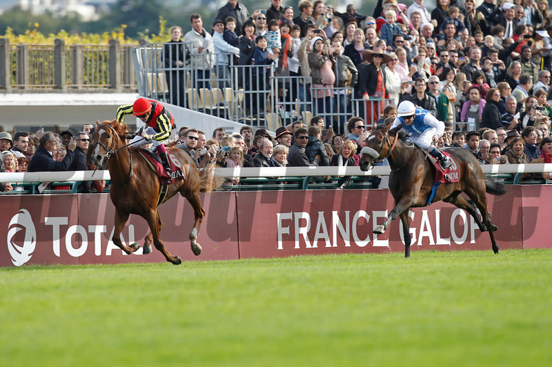 Solemia (right/10) wins the Arc from Orfevre, Longchamp 07/10/12
