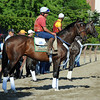 Atigun, and stablemate Unstoppable U, waiting to work Friday morning June 1st...<br /> © 2012 Rick Samuels/The Blood-Horse