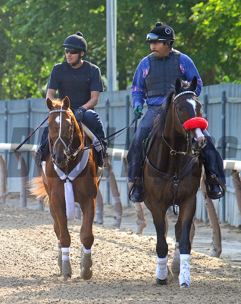 Kentucky Derby and Preakness winner I'll Have Another, and exercise rider Humberto Gomez, being led back to the barn by Lava Man<br /> Belmont, Saturday morning, May 26th.<br /> Photo by Rick Samuels