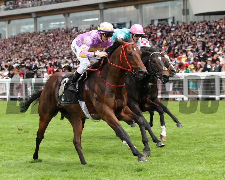 little bridge; zac purton up wins the kings stand stakes royal ascot; 6/19/12 photo by trevor jones;