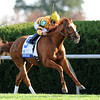 Wise Dan, Jose Lezcano up, wins the Shadwell Turf Mile, Keeneland Race Track; Lexington; KY 10/6/12 photo by Mathea Kelley