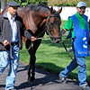Caption: Big Sam<br /> Scenes at Keeneland on Oct. 6, 2012.<br /> Keeneland<br /> Third4thRace10_6_12 image514<br /> Photo by Anne M. Eberhardt