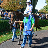 Big Sam with James Graham in the paddock in the 4th race<br /> Scenes at Keeneland on Oct. 6, 2012.<br /> Keeneland<br /> FourthRace10_6_12 image164<br /> Photo by Anne M. Eberhardt