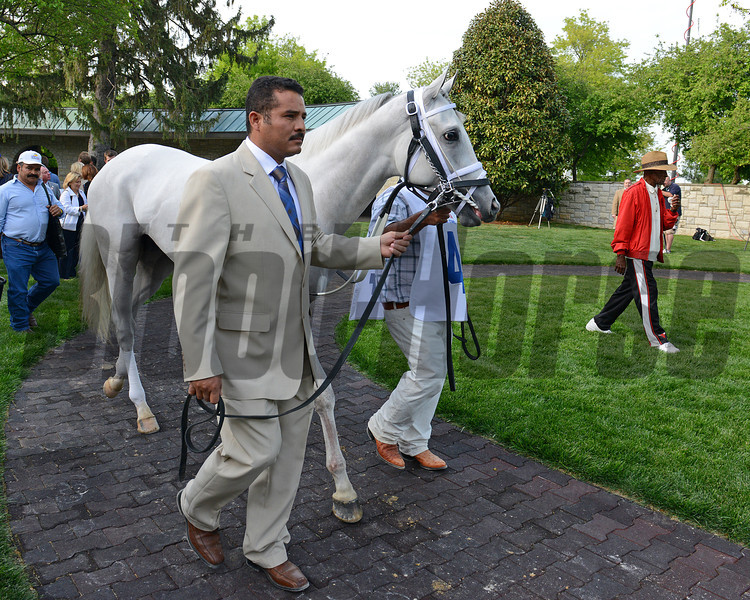 Hansen coming into the paddock, Toyota Blue Grass (gr. I)  on April 14, 2012, at Keeneland in Lexington, Ky.<br /> Photo by Anne M. Eberhardt