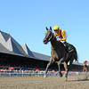 My Miss Aurelia wins the 2012 Mandys Gold Stakes.<br /> Photo by Coglianese Photos