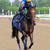 Bob Baffert trained Paynter<br /> Belmont, Saturday morning, May 26th..<br /> Photo by Rick Samuels