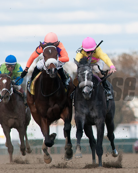 My Happy Face wins the Tempted Stakes at Aquedcut.<br /> Coglianese Photos.