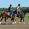 I'll Have Another - Belmont Park, June 1, 2012.<br /> Photo by Rick Samuels