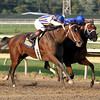 My Miss Aurelia w/Corey Nakatani up battle with Questing w/Irad Ortiz Jr. up to win the 43rd Running of the Cotillion Stakes (GI) at Parx on September 22, 2012.<br /> Photo by Chad B. Harmon