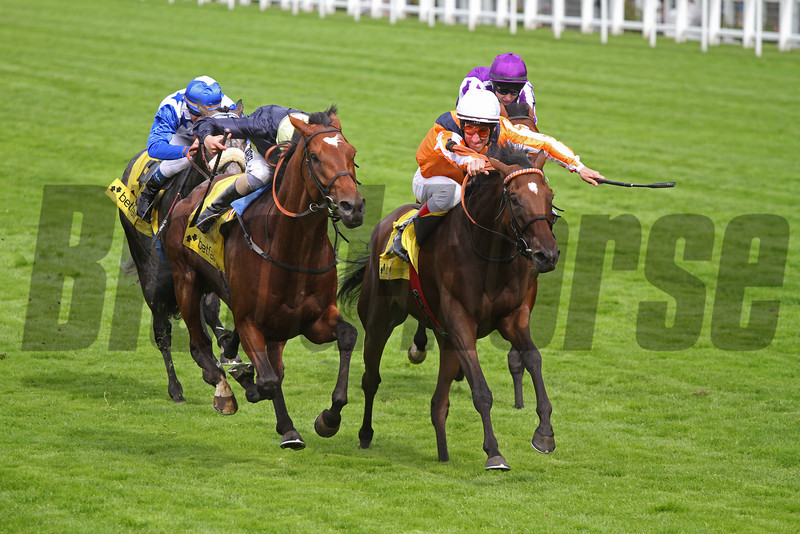 Ascot 21/7/12. King George Queen Elizabeth Stakes<br /> Danedream (White cap) wins from Nathaniel (left)<br /> Photo by Trevor Jones