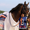 Handsome Mike heads into the paddock prior to winning the 33rd Running of the Pennsylvania Derby (GII) at Parx on September 22, 2012.<br /> Photo by Chad B. Harmon