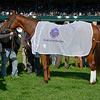 Caption: Groupie Doll after winning the Thoroughbred Club of America (gr. II)<br /> Photo by Anne M. Eberhardt
