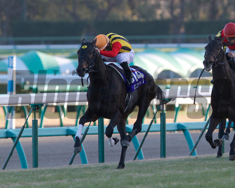 Logotype wins the Asahi Hai Futurity Stakes<br /> Photo by Kate Hunter